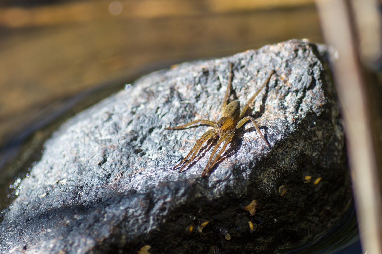 Eine Spinne sonnt sich