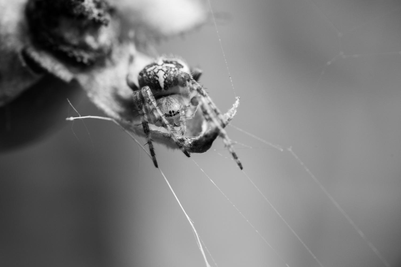 Eine Spinne wartet auf Opfer