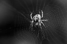 Die Spinne hängt bereit im Netz