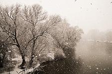 Linden im Winter