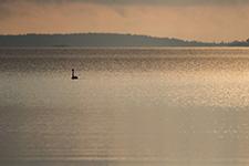 Ein Schwan auf einem See beim Sonnenaufgang