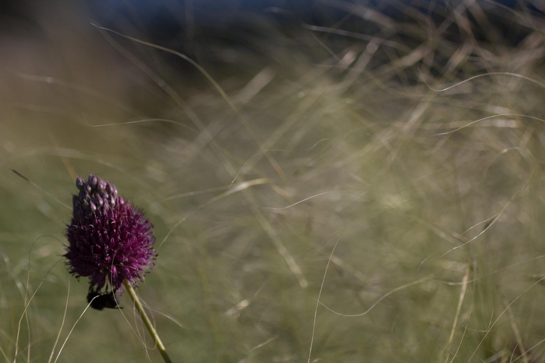 Biene im Wind