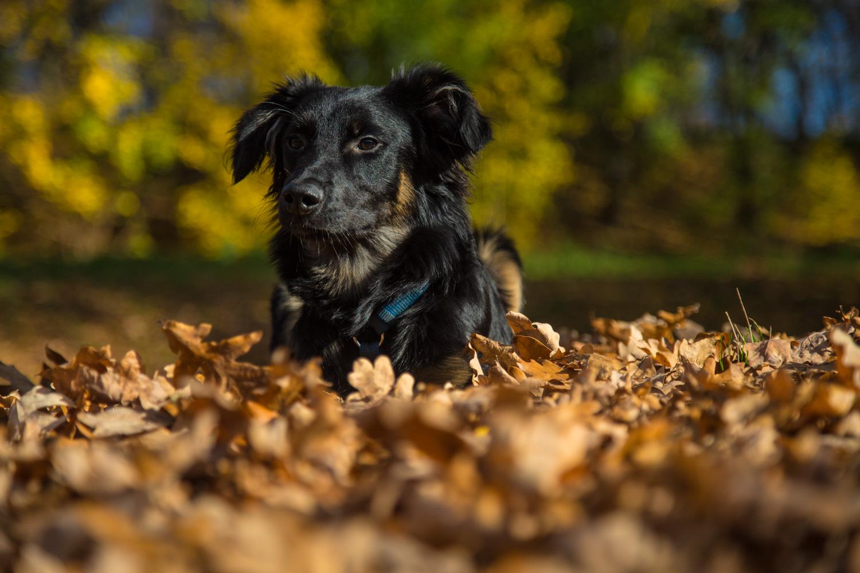 Jerry im Herbst